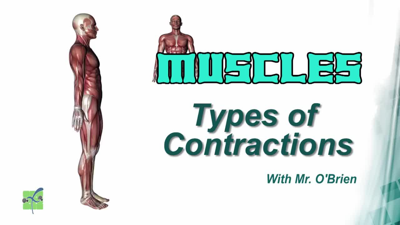 High - Muscles Contract